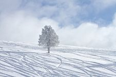 Free Frozen Tree Royalty Free Stock Photos - 14814788