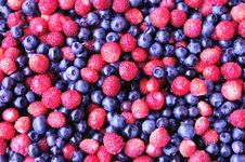 Free Wild Strawberry And Bilberry Stock Photo - 14815700