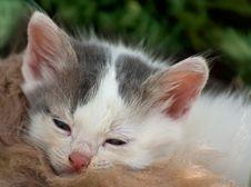 Free Sleepy Kitty Stock Photo - 14815800