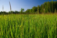 Free Green Grass Royalty Free Stock Photography - 14816007