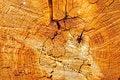 Free Wooden Texture Royalty Free Stock Photos - 14839238