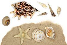 Seashells Collection Stock Photos