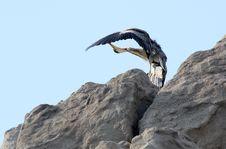 Free Feather Stock Photo - 14833290