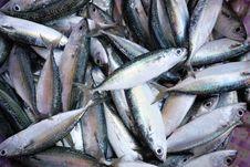 Many Fish 2 Stock Image