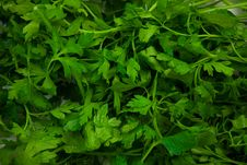 Free Parsley Royalty Free Stock Photo - 14835025