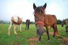 Free Horse Royalty Free Stock Photos - 14835488