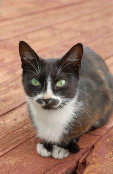 Free Cat On Foor Royalty Free Stock Image - 14836296