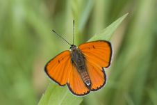 Free Butterfly Stock Photos - 14836663