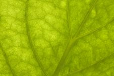 Free Macro Of A Green Leaf Stock Image - 14837591