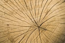 Free Tree Rings Royalty Free Stock Photo - 14838265