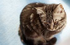 Kitten On A Floor Royalty Free Stock Photo