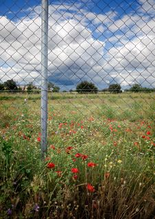 Free Fence And Flowers Stock Images - 14838794