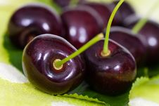 Free Cherries On Cherry Leaf Background Stock Photography - 14839502