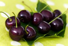 Free Cherries On Cherry Leaf Background Stock Photography - 14839522