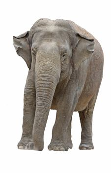 Free Elephant 2 Stock Photos - 14839863
