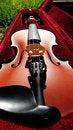 Free Violin Stock Photo - 14843990