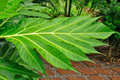 Free Wet Leaf In The Garden Stock Photography - 14844432