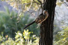 Free African Hornbill 2 Stock Photos - 14840333