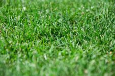 Free Cut Grass Royalty Free Stock Photos - 14840378