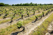 Free Vineyard In France Stock Photos - 14840623