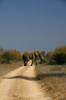 Free Elephand Crossing Stock Photography - 14840842