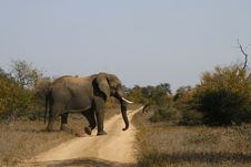 Free Elephant Crossing 2 Royalty Free Stock Image - 14840886