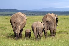 Free The End: Elephant Family Walking Away Stock Images - 14841364