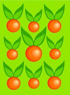Free Oranges Stock Photography - 14841632