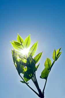 Free Green Leaf In Sunny Day Stock Images - 14841694