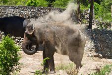 Free Elephat Stock Image - 14843121
