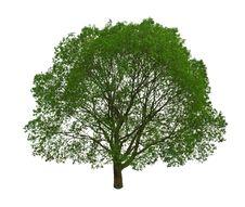 Free Tree Royalty Free Stock Photography - 14844217