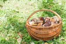 Free Mushrooms Royalty Free Stock Photos - 14844518