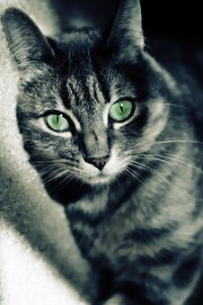 Free Green Eyed Cat Royalty Free Stock Photo - 14844645