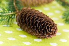 Free Twig Of Fir Tree With Brown Cones Stock Image - 14844941