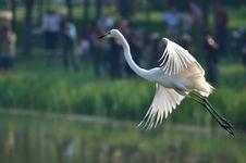 Free Many People Shoot Egrets Stock Image - 14845071