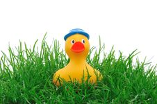 Free Rubber Duck In Grass Royalty Free Stock Photo - 14846655