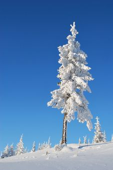 Free Fur-tree On A Mountain Winter Slope Stock Images - 14846824