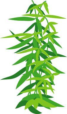 Free Bamboo Stock Photo - 14847040