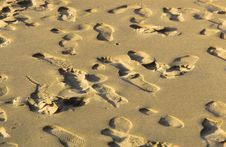 Free Marks Of Footspeps In Fine Sand Stock Photos - 14847073
