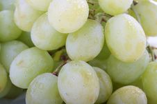 Free Grape Stock Images - 14847284