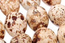 Free Photo Of The Quail Egg Royalty Free Stock Images - 14847839