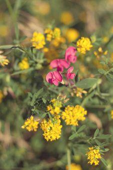 Free Flower Bouquet Stock Photo - 14849300