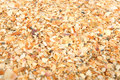 Free Sea Sand From Cockle-shells Stock Photo - 14851230
