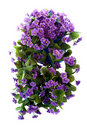 Free Violet Flowers Royalty Free Stock Photo - 14855895