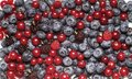 Free Berry Fruit Stock Image - 14858981