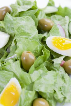 Free Salad Royalty Free Stock Images - 14850099
