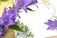Free Campanula Royalty Free Stock Image - 14851586