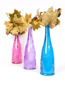 Multicolored Decorative Bottles With Wither Maple Royalty Free Stock Image
