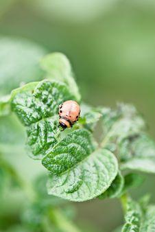 Free Wrecker Bug Royalty Free Stock Photo - 14853825