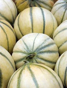Free Cataloupe Melons Royalty Free Stock Images - 14854019